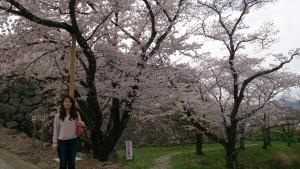篠山城にて花見