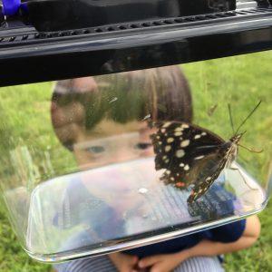 国蝶オオムラサキ放蝶会
