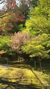 妙高山神池寺